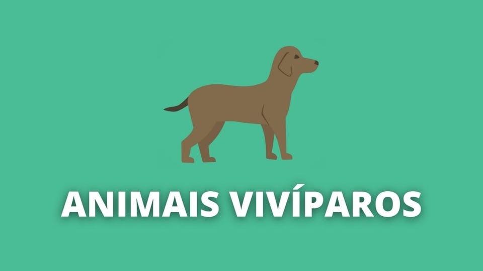 Animais vivíparos, o que são e principais características