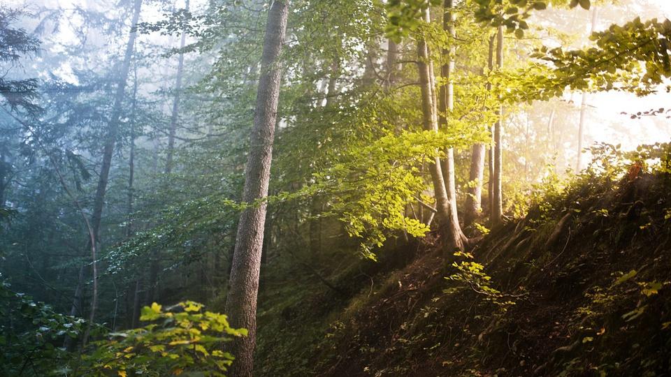 Concurso Semas PA: a foto mostra uma reserva florestal