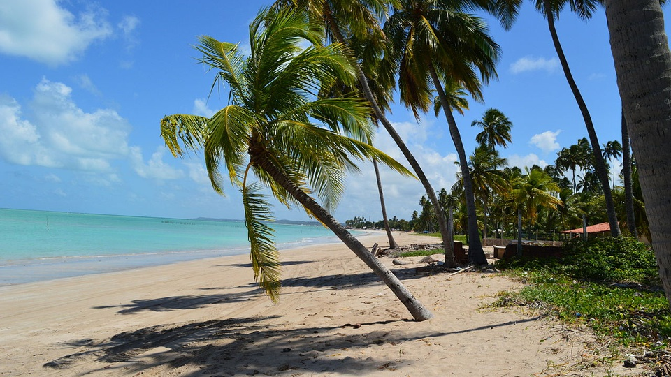 Concursos Alagoas; a imagem mostra uma praia com coqueiros na areia, um pouco de grama, uma casa ao fundo e o mar azul