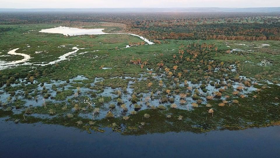 pantanal: a imagem mostra uma região alagada do pantanal