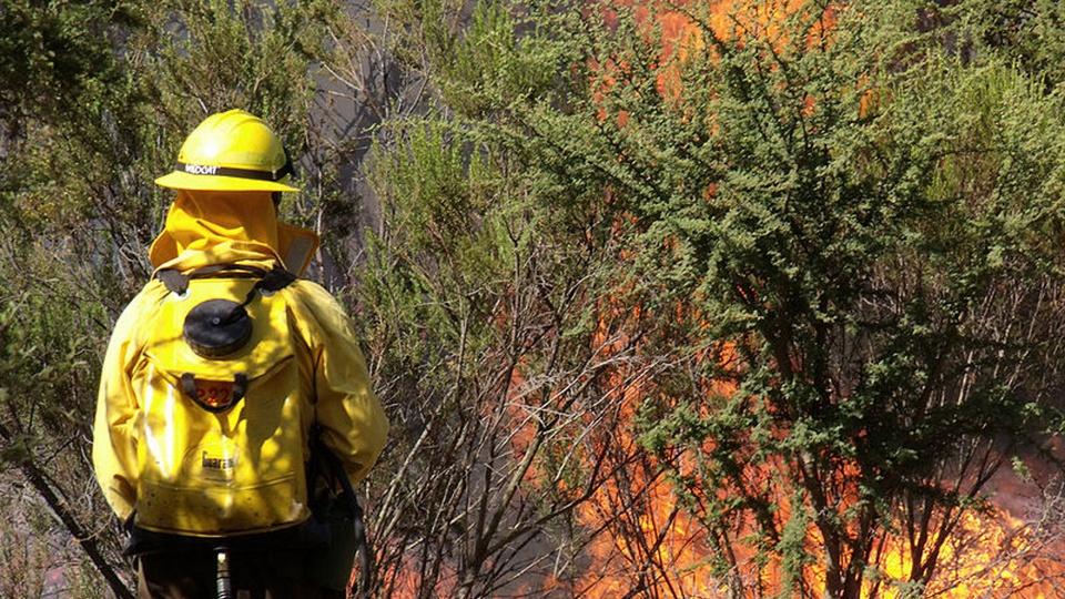 Processo seletivo Bombeiros MT: a foto mostra um brigadista apagando um incêndio numa floresta