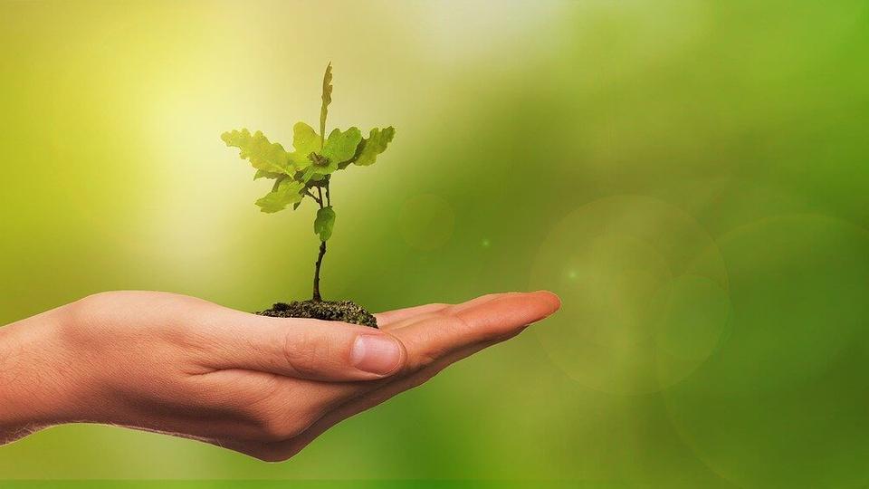 Processo seletivo IDEFLOR-Bio PA: a foto mostra uma mão segurando uma muda de planta