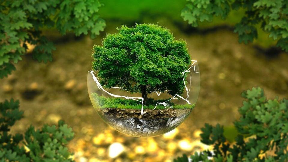 Processo seletivo SEMAS - PE: a foto mostra a natureza querendo simbolizar a necessidade de preservação ambiental. Mostra um pedaço da natureza dentro de uma bola de vidro quebrada